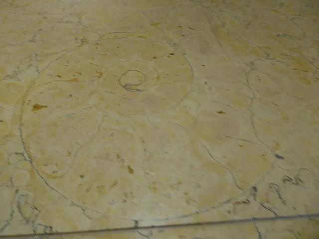 愛媛県庁貴賓室 アンモナイト化石