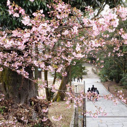 春の花がもう咲いています♪