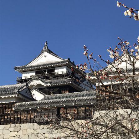 松山城に梅の花が咲いています