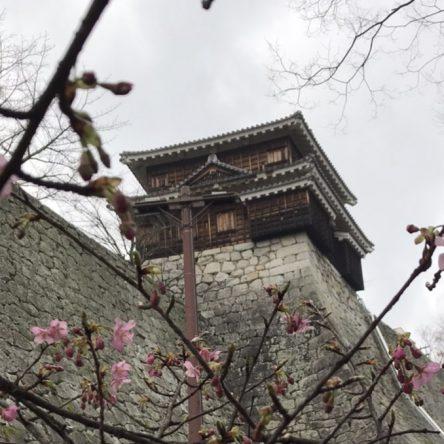 松山城に河津桜が咲き始めました♪